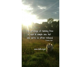 The Privilege Of Running Free.....