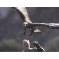 Falconry - postcards by Javier Ceballos
