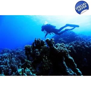 Red Sea Diving 8 day tour from Amman