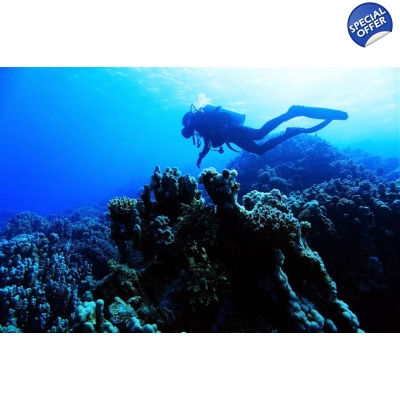 Red Sea Diving 8 day tour from Amman title=