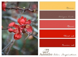 Furniture Paints - Reds & Yellows
