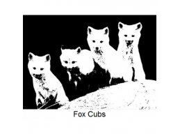 Art Stamps - Fox Cubs