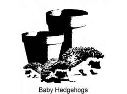 Art Stamps - Baby Hedgehogs