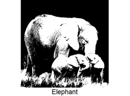 Art Stamps - Elephant