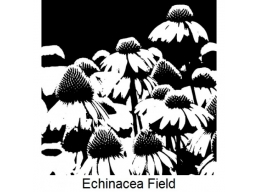 Art Stamps - Echinecea Field