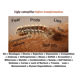 Caterpillar/Butterfly 2 Sided Laminated Card Large