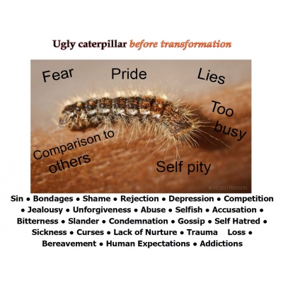 Caterpillar/Butterfly 2 Sided Laminated Card Small