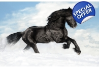 Black Beauty Christmas Cards 10 Pack