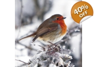 Robin Christmas Cards 10 Pack
