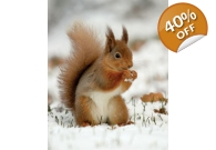 Squirrel Christmas Cards 10 Pack.