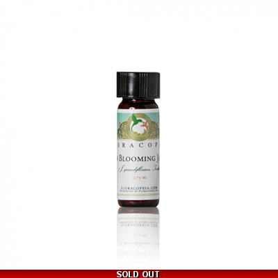 Jasmine Absolute Oil Dawn Blooming - Organic India - 1 Dram 3.75 mL