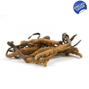 Cordyceps Extract 16oz