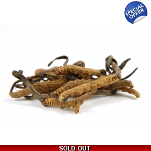 Cordyceps Extract 4oz