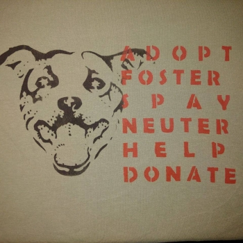 Staffy Adopt/Foster/Spay