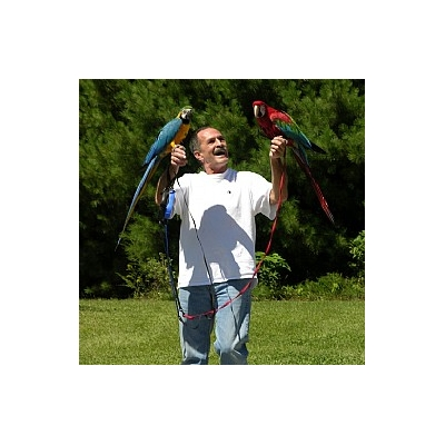 Aviator Bird Harness  Escape proof with instructional DVD