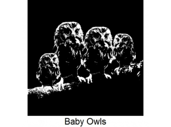 Art Stamps - Baby Owls