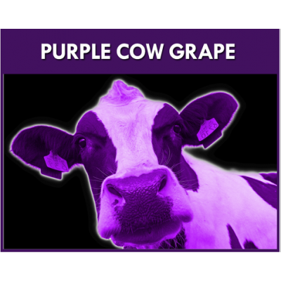 Purple Cow Grape Flavou..