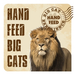 Hand Feed Big Cat Exper..
