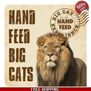 Hand Feed Big Cat Experience
