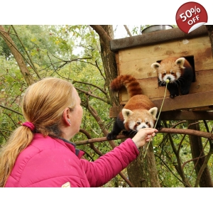 Meet the Red Pandas - Red Pa..