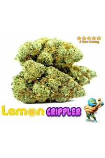 Lemon Crippler 26% THC
