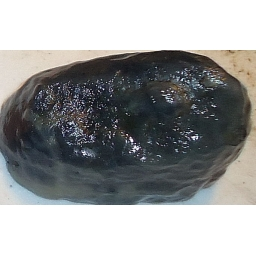 Black Agate 55X40X30 MM 450 ..
