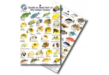 Guide to Reef Fish of the Indian Ocean