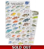 Guide to Fish of the Ba..