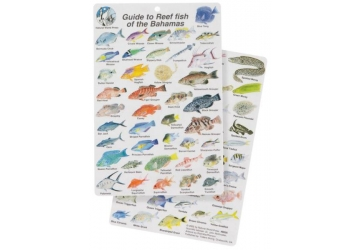 Guide to Fish of the Bahamas