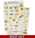 Guide to Reef Fish of I..