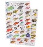 Guide to Reef Fish of t..