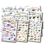 World Collection of Reef Fish Guides