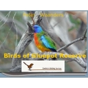 Birds of Gluepot Photo booklet
