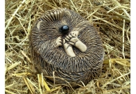 Baby Hedgehog - Handmade in stoneware ..
