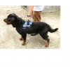 Dog Training Harness - ..