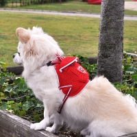 Backpack Harness & Lead Set - Lov..